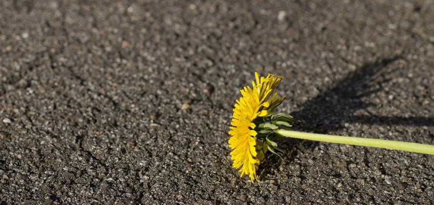 Nuevas promociones de primavera en Repara Tu Vehículo